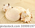 beach sand sea 30999197