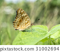 butterfly on leave 31002694