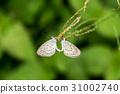 butterfly in the garden. 31002740