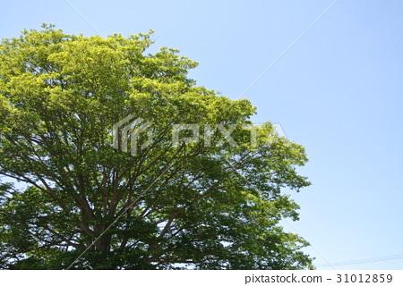 天空和樹 31012859