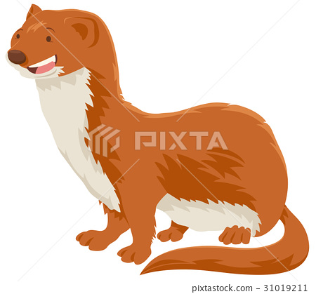 weasel cartoon animal character 31019211