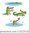 crocodile, nature, isolated 31022618
