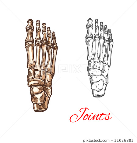 Vector sketch icon of human foot bones or joints 31026883