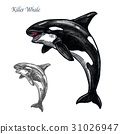 Killer whale or orca sea animal isolated sketch 31026947