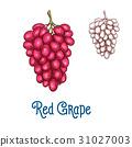 葡萄 水果 食物 31027003
