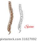 脊柱 骨頭 關節 31027092