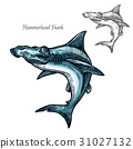 hammerhead, shark, fish 31027132