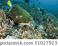 海底的 海裡 珊瑚 31027923