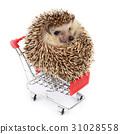 Little hedgehog and shopping cart. 31028558