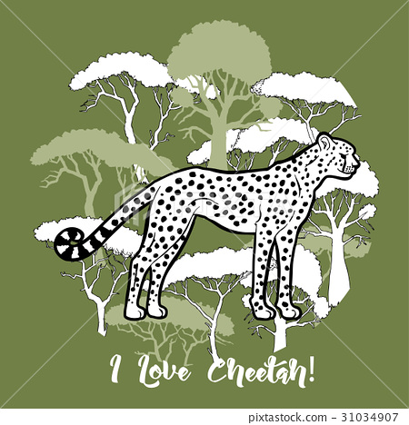 Cheetah and savanna trees print 31034907