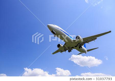 飛機和藍天 31037793