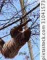Lid prairie sloth 31041573