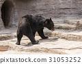 asian, black, bear 31053252