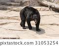 asian, black, bear 31053254