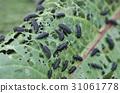 leaf, bug-eaten, worm-eaten 31061778