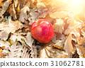 apple, autumn, background 31062781