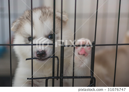 Cute puppy in cage 31076747
