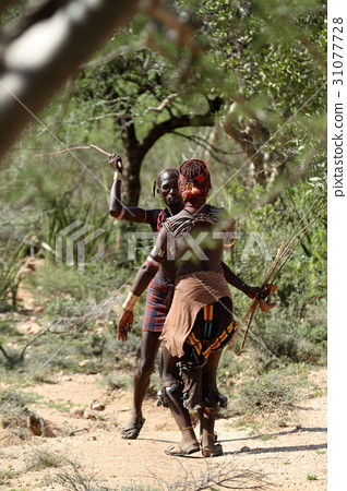 The tribe of Hamar in the Omo Valley of Ethiopia 31077728