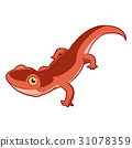 newt, vector, cartoon 31078359