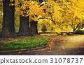 Beautiful Autumn in shinjuku park 31078737