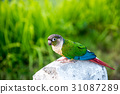 Parrot, lovely bird, animal and pet 31087289