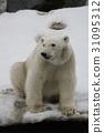 北极熊 哺乳动物 濒危物种 31095312