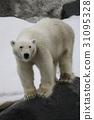北极熊 哺乳动物 濒危物种 31095328