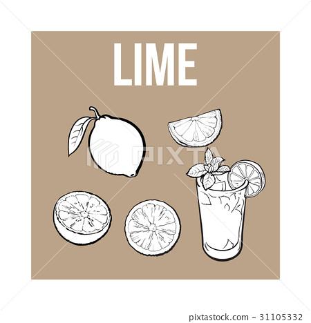 Whole, half, quarter lime and glass of lemonade 31105332