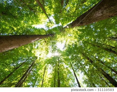 森林沐浴 31110503