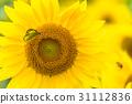 bloom, blossom, blossoms 31112836