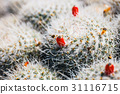 Beautiful cactus in the garden, close up 31116715