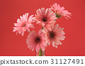 Pink Gebera flowers bouquet on red background  31127491