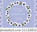 anemone, windflower, chaplet 31132833