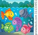 fish, fishes, aquatic 31133051