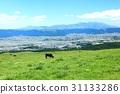 grass field, grassland, grasslands 31133286