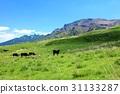 grass field, grassland, grasslands 31133287