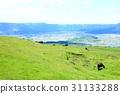 grass field, grassland, grasslands 31133288