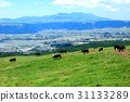 grass field, grassland, grasslands 31133289
