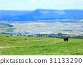 grass field, grassland, grasslands 31133290