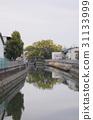 大阪縣 古老的河 大樹 31133999