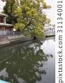 大阪縣 古老的河 大樹 31134001