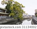大阪縣 古老的河 大樹 31134002
