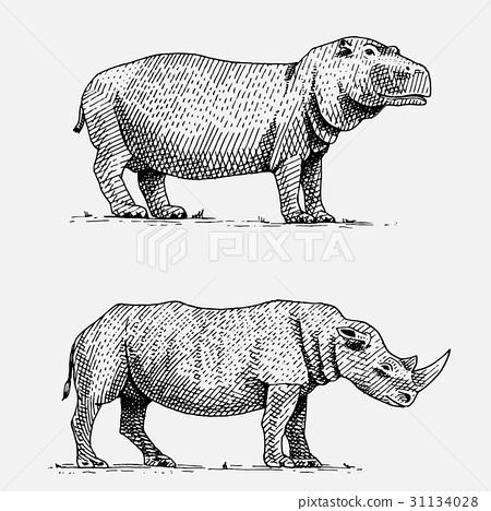 hippopotamus and black or white rhinoceros hand 31134028