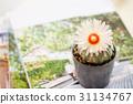 beautiful bloom blooming 31134767