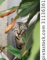 สัตว์,สัตว์ต่างๆ,แมว 31136361