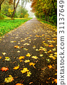 Road in autumn forest. Autumn landscape 31137649