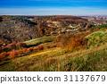 tree, autumn, hill 31137679