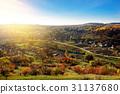 tree, autumn, hill 31137680