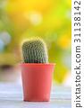 cactus, flowerpot, pot 31138142