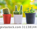 cactus, flowerpot, pot 31138144